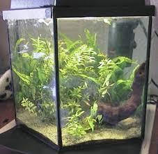 pompe a chaleur aquarium aphyosemion striatum aquariums de véronique