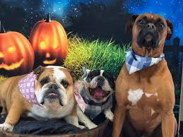 Spirit Halloween Bakersfield bakersfield halloween store