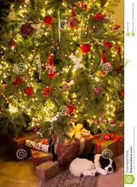 Eby Pines Christmas Trees Hours by Christmas Presents Under The Tree Christmas Lights Decoration