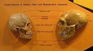 anatomically modern human