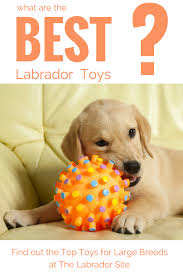 No Shed Dog Breeds Large by Best Dog Toys For Large Breeds