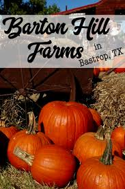 Pumpkin Patch Bastrop County by Get Lost In The Maze Fall Fun At Barton Hill Farms In Bastrop Tx