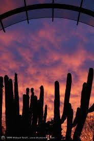 Pumpkin Patch Farms In Phoenix Az by 91 Best Phoenix Livin U0027 Images On Pinterest Phoenix Arizona And