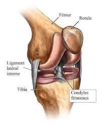 rupture du ligament latéral interne du genou symptome et reeducation