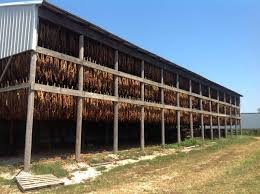 Tobacco Barn - Google Search | Historic Barn Houses | Pinterest ... Catalogers Corner Barns Field Trip South Tobacco And Woodwork Wood Shop Barn Virginia Tobacco Barns 1940s Google Search Memories Shadowy This Barn Is Visible From Us Route Flickr Project 365332 A Teaser Emily Carter Mitchell Carolyns Travel Stories Recumbent Conspiracy Theorist Ride B O Trail Asheville Shopping Holly Mathis Interiors Historic Houses Pinterest Old Outdoor Places Spaces Greensboro Daily Photo Log Type Typical For North Carolina Group