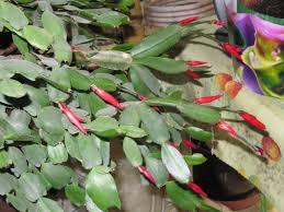 entretien plante grasse d interieur plante grasse a fleur d intérieur photos de magnolisafleur