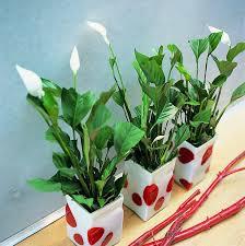 plante d駱olluante bureau chambre plante dépolluante plante dépolluante plante dépolluante