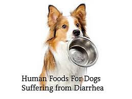 Dog Diarrhea Pumpkin by 10 Human Foods Good For Dogs With Diarrhea Or Upset Stomach