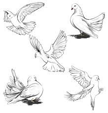 how to draw a realistic dove Google Search