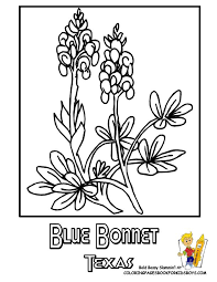 Texas State Flower Coloring Page