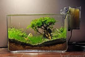 How To Grow : Moss Trees - YouTube Photo Planted Axolotl Aquascape Tank Caudataorg Suitable Plants Aqua Rebell Tutorial Natures Chaos By James Findley The Making Aquascaping Aquarium Ideas From Aquatics Live 2012 Part 4 Youtube October 2010 Of The Month Ikebana Aquascaping World Public Search Preserveio Need Some Advice On My Planned Aquascape Forum 100 Cave Aquariums And Photography Setup Seriesroot A Tree Animalia Kingdom Show My Our Lovely 28l Continuity Video Gallery Green 90p Iwagumi Rock Garden Page 8