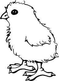 Activité Animal Art Bébé Bec Oiseau Livre Brosse Dessin