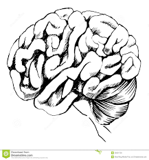 Human Brain Coloring Book Colouring Pages