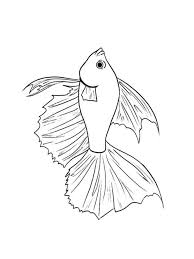 Betta Fish Coloring Pages 7