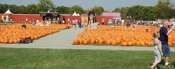 Pumpkin Picking Corn Maze Long Island Ny by The Largest Pumpkin Picking Farm In Long Island With Thousands Of