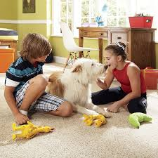 Best Type Of Flooring For Dogs by Carpet Buying Guide