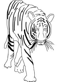 Tiger Coloring Sheets Baby Pages