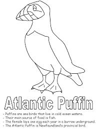 Arctic Tern Atlantic Puffin