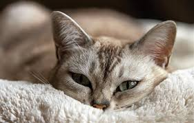 cat runny nose 7 simple and amazing home remedies for cats with colds