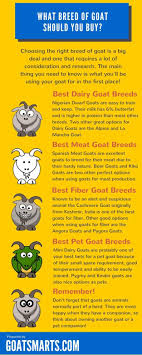Best 25+ Pet Breeds Ideas On Pinterest | Animal Magazines, People ... 5 In 1 Paw Patrol Roll Mega Track Lookout Tower Dog Dogsmom Exploring The Blogosphere Unboxing Paw Patrol Roll Rockys Barn Rescue And Play Fun The Barn Spider Fun Animals Wiki Videos Pictures Stories Hasbros Realistic Joy For All Companion Pet Dog Page Qvccom Steven Universe Back To Episode Recap Point Of A Transporter Problems With Patroller Blocks Robo Jeanne Wilkinson May 2014 Best 25 Products Ideas On Pinterest Collars Leashes Owners Reminded Vaccinate Cats After Dover Cases Of Feline