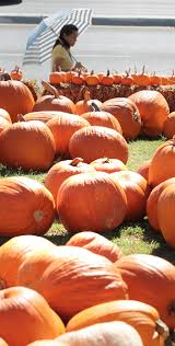 Pumpkin Patches In Bakersfield Ca by Fun At The Pumpkin Patch At The Wesley United Methodist Church On