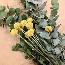 Mã Bel Hildesheim Kã Chen Trommelstöckchen Eucalyptus Trockenblumen