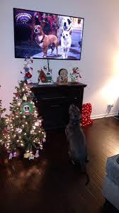 Christmas Tree Cataract Seen In by John Wood Johnpwood Twitter