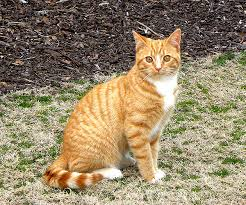 orange cat names how do you name your cats catster