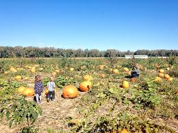 Rombachs Pumpkin Patch Hours by Fall Filled Weekend