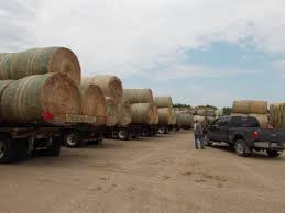Dakota Hay Auction - Home Hay For Sale In Boon Michigan Boonville Map Outstanding Dreams Alpaca Farm Phil Liske Straw Richs Cnection Peterbilt 379 At Truckin Kids 2013 Youtube Bruckners Bruckner Truck Sales Lorry Stock Photos Images Alamy Mitsubishi Raider Wikipedia For Lubbock Tx Freightliner Western Star Barmedman Motors Cars Sale In Riverina New South Wales On Economy Mfg Dennis Farms Equipment Auction The Wendt Group Inc Land And