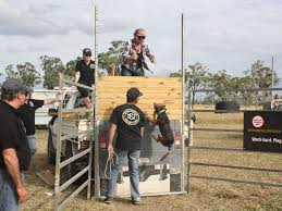 100 Monster Truck Mayhem Visit Bowen Queensland Collinsville Bacon Busters And