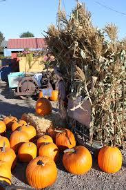 Pumpkin Patch Near Vancouver Wa by Bz Farms Pumpkin Patch Vancouver Wa