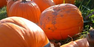 Pumpkin Patch Indiana County Pa by Michigan U0027s Best Apple Orchards And Pumpkin Patches U2013 A Healthier