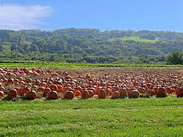 Pumpkin Patch Near Madison Wi by Jones Family Farms Shelton Ct Pumpkins Hayrides