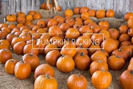 Pumpkin Patch North Austin Tx by Weekend Getaway Pumpkin Picking In Elgin Tx