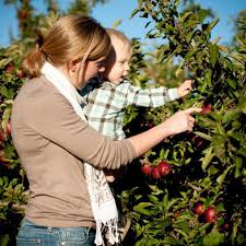Pumpkin Picking In Ct by Pumpkin Patches In And Around Fairfield County Kids Out And
