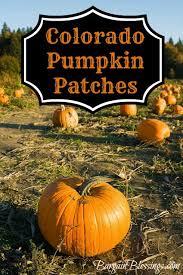 Pumpkin Patch Cincinnati by 28 Pumpkin Patch Near Cincinnati Ohio Download Pumpkin