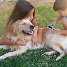 dog grooming brushes combs rakes ebay