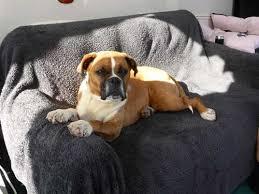 Kirkland Dog Beds by Kirkland Signature Bolstered Memory Foam Dog Bed Large