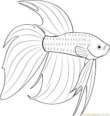 Betta Red Fish Coloring Page
