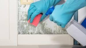 schimmel dauerhaft entfernen und vorbeugen tipps