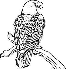 Bird Color Pages Kids Coloring