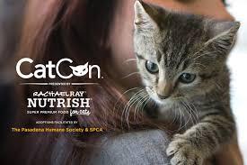 adopt a cat catcon adopt a cat