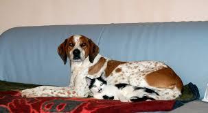 hund und katze so funktioniert das zusammenleben planet hund