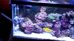 Live Rock AquaScaped 55 Gallon Saltwater Tank - YouTube Aquarium Aquascaping Rocks Aquascape Designs Ideas Project Reef Rock 21 Dry Walt Smith Bulk Supply Review Real Generation 4 Digitalreefs News Info How To Live Purple Live Rock Youtube Updated Clear Pics Newbies Attempt At Aquascaping So Far 3reef Design Aquafishvietcom Bring Back The Wall News Builders Keeping Austin Club Walls For A Tank Callorecom River Suggestion Planted Forum