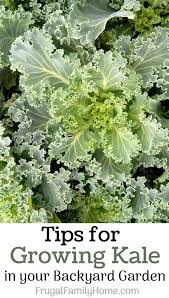 All The Tips You'll Need To Grow Kale From Seeds In Containers Or ... Full Image For Mesmerizing Simple Backyard Garden Ideas Related Best 25 Garden Design Ideas On Pinterest Gardening In Zone 6 Tips Diy Design Decor Gallery Stacked Herb 12 Ways To Make Your Yard More Inviting Yards Gardens And Vegetable Gardening With Potted Dish 3443 Best Images Decorating Easy Diy Projects Backyards Trendy 44 Chic Flower For Beginners Six Home Decorations Insight With U