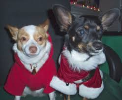 Rat Terrier Excessive Shedding by Dogs And Cats Justonemorepet
