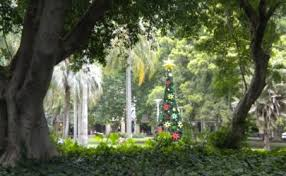 Christmas Tree Recycling Carmel Valley San Diego by Carmel Valley San Diego Community Information The Carmel