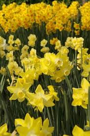 best bulbs for the northern pacific coast region