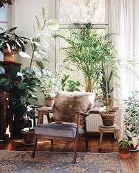 Best Plants For Sunny Balcony Decorate Living Room With Indoor Ideas Low Maintenance House Plant Decor